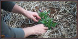 Consejos para cuidar las plantas en invierno